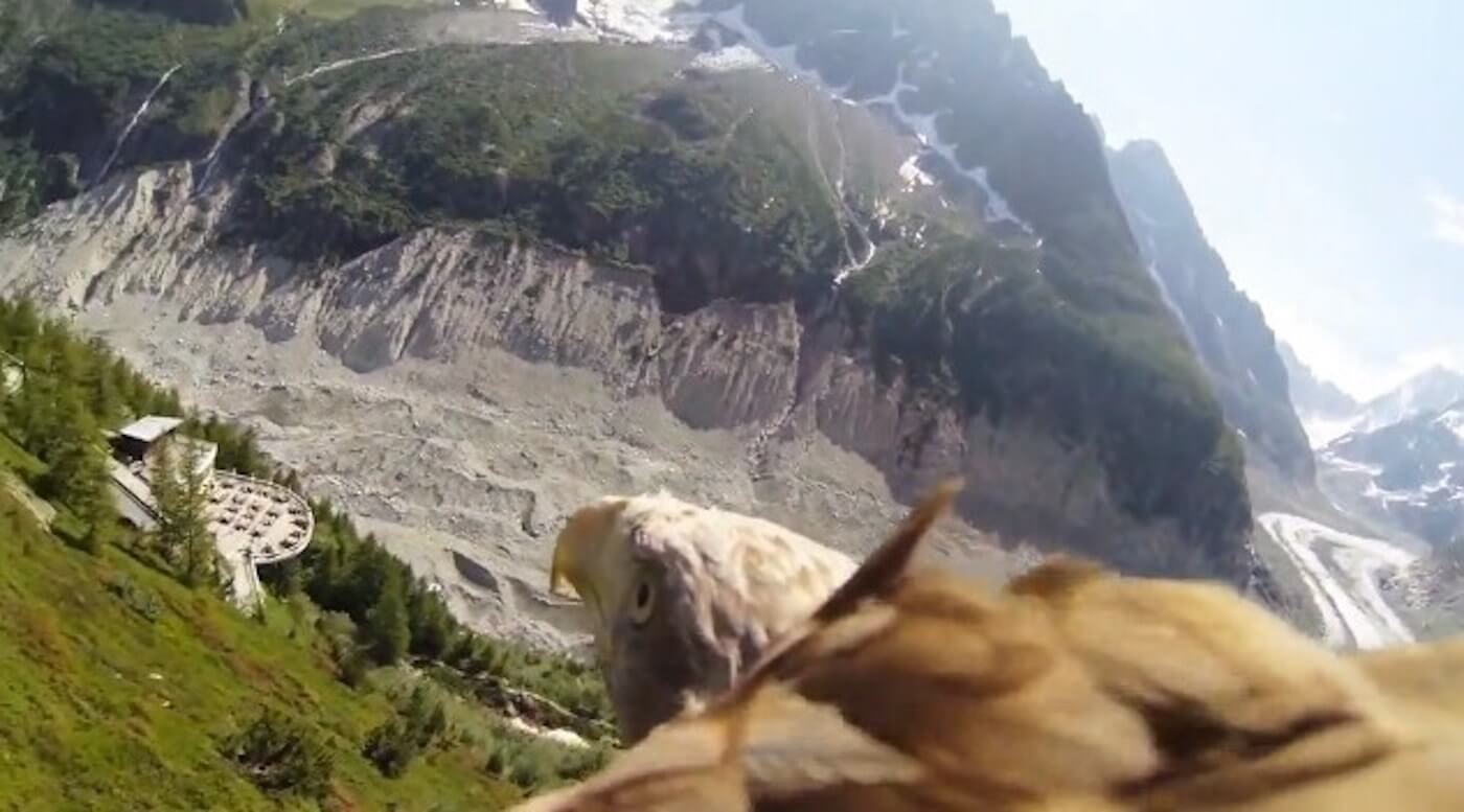 How to make the best GoPro videos for your Brand - This bald eagle knows how to make the best GoPro video
