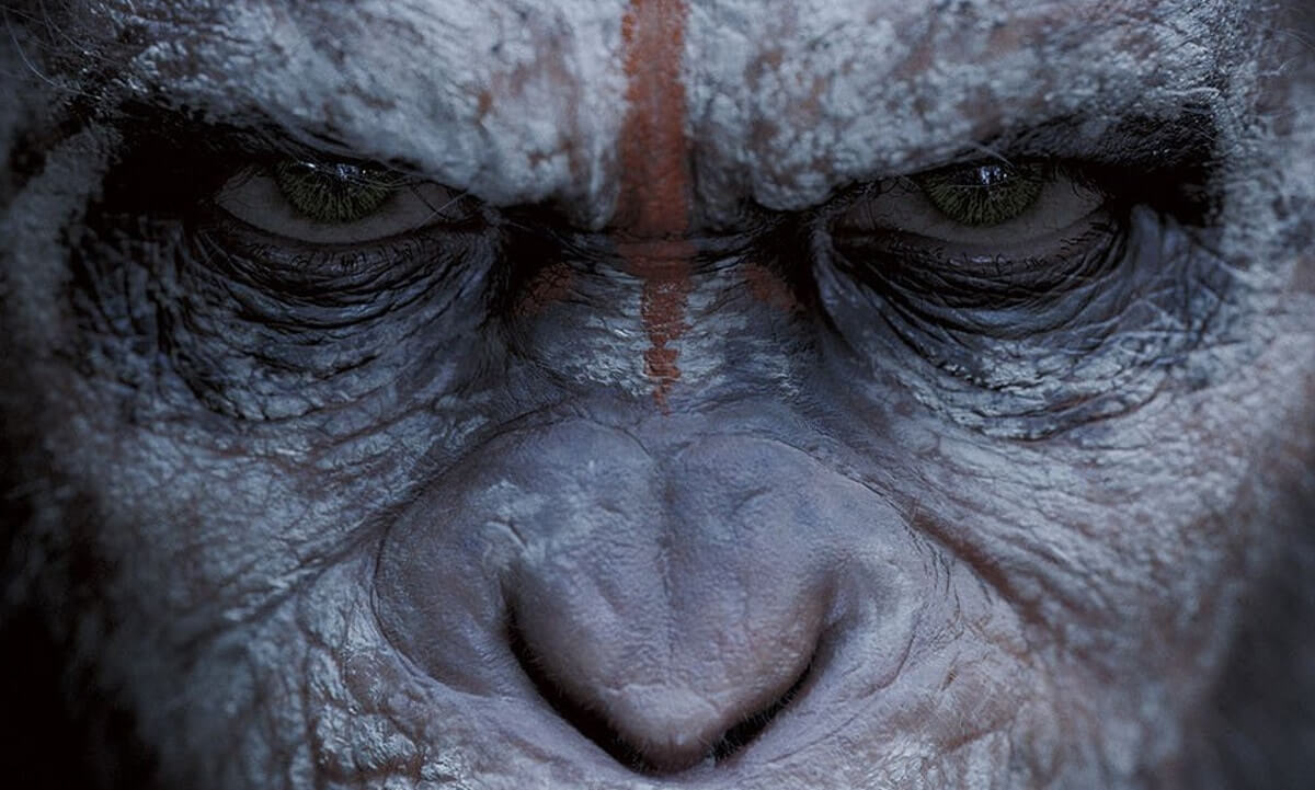 Close Up Shot - The Art of the Camera Angle - Planet of the Apes